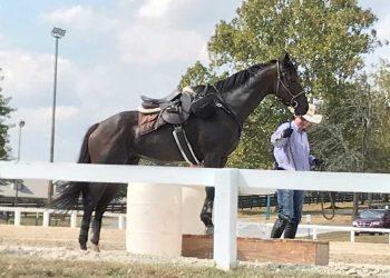 Tom Mansmann with horse