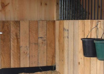 Clean horse stall at Pacific Farms